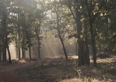 Pench MH tiger reserve